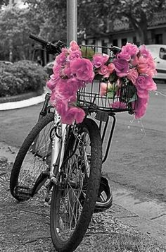 Pink flowers on the wires of a back basket on a bike