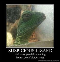 Mens Womens Humor : Reptile Humor - Lizards, they know you did....
