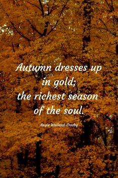 """a soul and inspirational fall quote and nature photography with beautiful golden leaves & autumn trees.""""Autumn dresses up in gold; the richest season of the soul. Soul Quotes, Nature Quotes, Words Quotes, Peace Quotes, Qoutes, Fall Season Quotes, Love Fall Quotes, Quotes About Autumn, Autumn Quotes Cozy"""