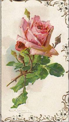Catherine Klein by Cıgdem Bakırcı Art Floral, Floral Vintage, Art Vintage, Vintage Ephemera, Vintage Postcards, Vintage Flowers, Vintage Prints, Floral Prints, Vintage Pictures