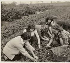 Farmerettes working on hands and knees in field :: Archives & Special Collections Digital Images :: 1942
