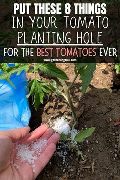 Organic Fertilizer, Organic Gardening, Gardening Tips, Container Gardening, Growing Tomato Plants, Growing Vegetables, Growing Tomatoes, Growing Herbs, Soil Layers