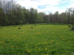 My dandelion crop Dandelion, Golf Courses, Mountains, Nature, Handmade, Travel, Viajes, Traveling, Craft