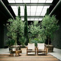 Six Gallery, Milan Rooftop Garden, Indoor Garden, Indoor Plants, Indoor Outdoor, Bühnen Design, Milan Design, Architectural Digest, Patio Interior, Room Interior
