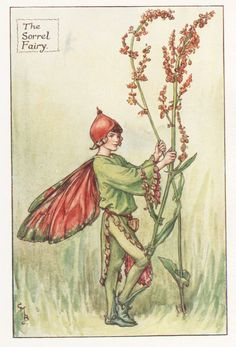 Flower Fairies: THE SORREL FAIRY Vintage Print c1930 by Cicely Mary Barker