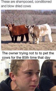 Crazy Funny Memes, Really Funny Memes, Funny Animal Memes, Stupid Memes, Cute Funny Animals, Funny Relatable Memes, Haha Funny, Funny Cute, Dankest Memes