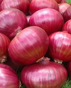 200 Organically Grown Red Burgundy Sweet Onion Seeds Heirloom Non GMO Delicious Grow Hair Back, Ways To Grow Hair, Fruit And Veg, Fruits And Vegetables, Fresh Fruit, Mango Fruit, Organic Vegetables, Fresh Ginger, Sante Bio