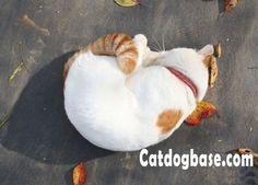 Funny Cat Videos | I am a shrimp