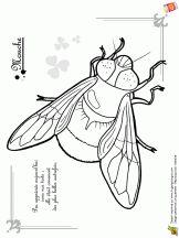 Coloriage les petites bêtes sur Hugolescargot.com