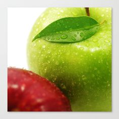 Appel in contrasts Stretched Canvas by Tanja Riedel - $85.00