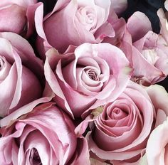 Pastel pink roses #simplyessential