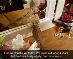 Dump A Day Attack Of Animals With Funny Captions - 25 Pics Funny Animal Memes, Cute Funny Animals, Funny Animal Pictures, Funny Cute, Animal Funnies, Funny Pics, Funny Memes, Animal Pics, Cute Reptiles