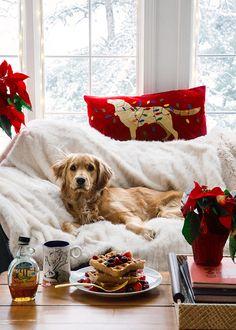 Prietenului tău patruped deja îi este dor de Crăciunul ce a trecut #lafereastrata