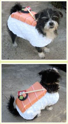 DIY sushi dog costume