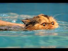 FUNNY VIDEOS Funny Cats Videos Funny Animals Cute Pets Try Not To Laugh - YouTube