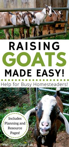 Raising goats made easy! The Busy Homesteader's Goat Management Binder is your one stop for all of your goat care and needs!
