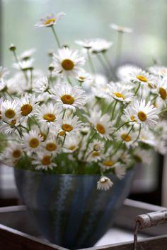How I love daisies!