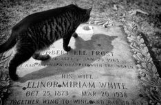 """and miles to go before I sleep."""" --Robert Frost Note: cat is at Frost's grave] Bird Pictures, Funny Pictures, Big Cats, Cats And Kittens, Before I Sleep, Cemetery Art, Robert Frost, Cat Art, Cat Lovers"""