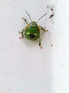 teeny tiny bug
