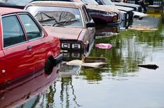 How Can I Help Louisiana Flood Victims? Tips from a Baton Rouge Personal-Injury Attorney Lake Charles Louisiana, Flood Insurance, Injury Attorney, Criminal Defense, Personal Injury Lawyer, Water Flood, Thailand, October, Car
