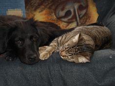 #Freya #Dog #Tom #Cat #Puppys #LoveAnimals #MyMonsters #MyPets #CanaryIsland #PetModel #MyLovers