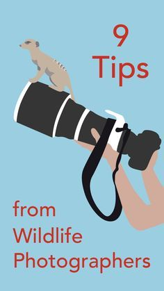 Check out some of my wildlife photography tips in this article from Mashable.