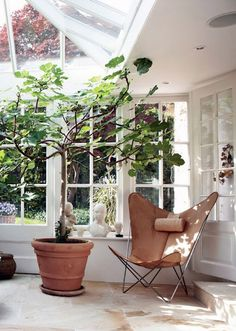 modern greenhouse like room with plants. / sfgirlbybay