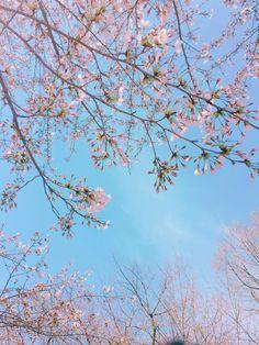 파란하늘 벚꽃