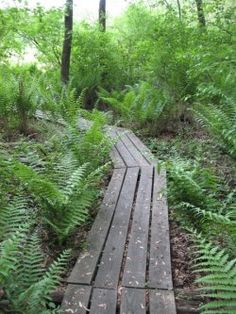 3 best places for nature hiking in Wayne County, Ohio. Image: Brown's Bog boardwalk