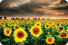 Our Past is a Nice Place to Visit but surely Not a Good Place to Stay - Easy Branches