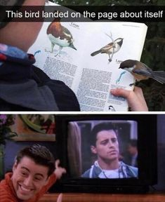 """Twenty-Nine Birding Memes For A Very Specific Kind Of Person - Funny memes that """"GET IT"""" and want you to too. Get the latest funniest memes and keep up what is going on in the meme-o-sphere. Memes Estúpidos, Stupid Funny Memes, Funny Relatable Memes, Funny Posts, Funny Quotes, True Memes, Haha Funny, Laugh Quotes, Humour Quotes"""