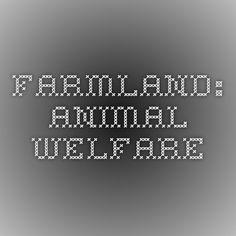 FARMLAND: Animal Welfare