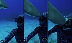 That's going to hurt! Watch the moment a BLIND lemon shark headbutts a diver's face as he swims underwater     Read more: http://www.dailymail.co.uk/news/article-3689552/That-s-going-hurt-Watch-moment-BLIND-lemon-shark-headbutts-diver-s-face-swims-underwater.html#ixzz4EWdI7WMk  Follow us: @MailOnline on Twitter | DailyMail on Facebook