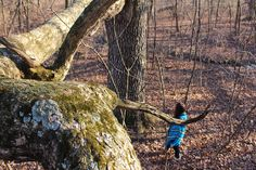Go Exploring | Wake the Tree Furniture Co.