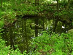 How to protect sensitive vernal pools in the built landscape