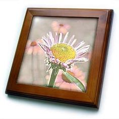 """Patricia Sanders Flowers - Pink and Peach Echinacea Floral Art - Framed Tiles :           Pink and Peach Echinacea Floral Art Framed Tile is 8"""" x 8"""" with a 6"""" x 6"""" high gloss inset ceramic tile, surrounded by a solid wood frame with predrilled keyhole for easy wall mounting.                           **Read more Details : http://gethotprice.com/appin/?t=B005F5X9E4"""