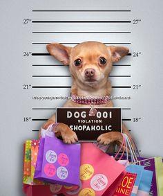 Funny Chihuahua Mug Shot   john lund Yaziq It((( ))))