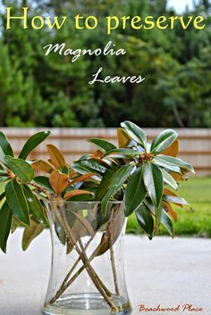 Beachwood Place: Ten Minute Fall Vase, how to preserve magnolia leaves & DIY Magnolia Wreath