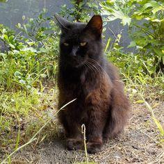 Boo-chang #cat #blackcat #catstagram #catofinstagram #猫 #黒猫