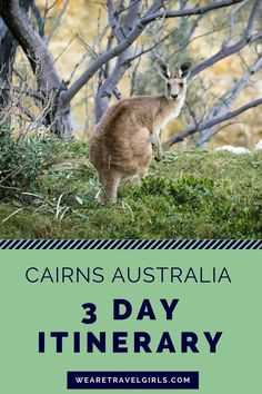 3 DAY ITINERARY FOR CAIRNS, AUSTRALIA: Cairns is often overlooked on a trip to Australia, but it shouldn't be! See why you should visit and what to do in the city and the surrounding areas in this post. By Sarah Latham for WeAreTravelGirls. Australia 2018, Coast Australia, Queensland Australia, Western Australia, Visit Australia, Australia Tours, Victoria Australia, Sydney Australia, Safari