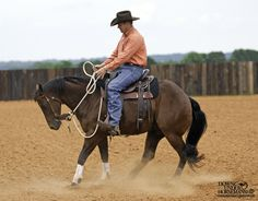 Riding Exercise #14: Yield the Hindquarters & Back Up Goal: To have the horse soften his head and neck laterally, yield his hindquarters 360 degrees, and then back up. The horse should move backwards energetically with no resistance in your hands. More about the exercise: https://www.downunderhorsemanship.com/Store/Product/MEDIA/D/252/