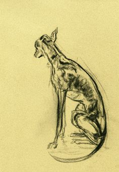 """""""Come home"""" Charcoal Whippet Sketch"""