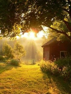 good morning, sunshine