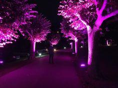Camino al palacio iluminado en rosa