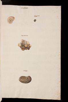 Abbildungen von Mineralien, Corallen usw Gesner, Conrad [1516-1565] ; Platter, Felix [1536-1614] ; Kentmann, Johannes [1518-1574] Zürich, vor 1565 Universitätsbibliothek Basel