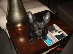 Hope I grow into these ears!#Repin By:Pinterest++ for iPad#