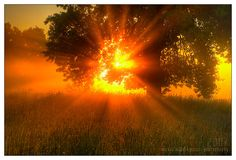 Sunlight may help treat multiple sclerosis symptoms Light Of Life, Light Of The World, Love Live, Science And Nature, What Is Like, Sunlight, Sunrise, Solar, Nature