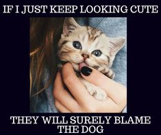If I just keep looking cute, they will surely blame the dog   #petsworld #pussycat #catlovers  #cats  #catholic  #caturday  #catmemes #memes
