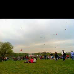 DC kite festival!