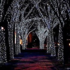 In the lane lights are sparkling ...